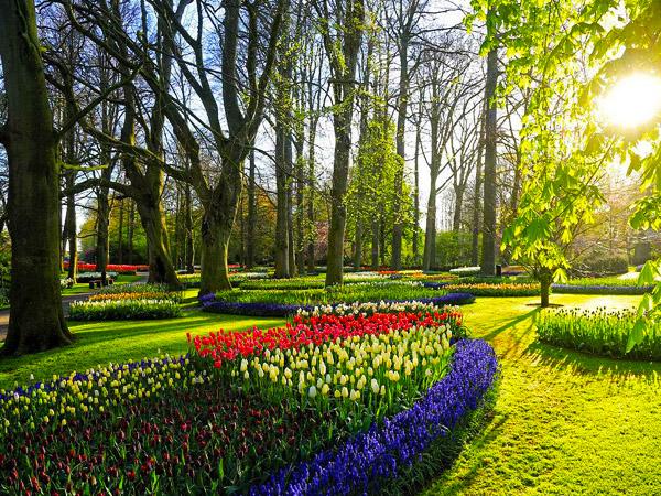 郁金香王国自驾之旅--品味荷兰、比利时九